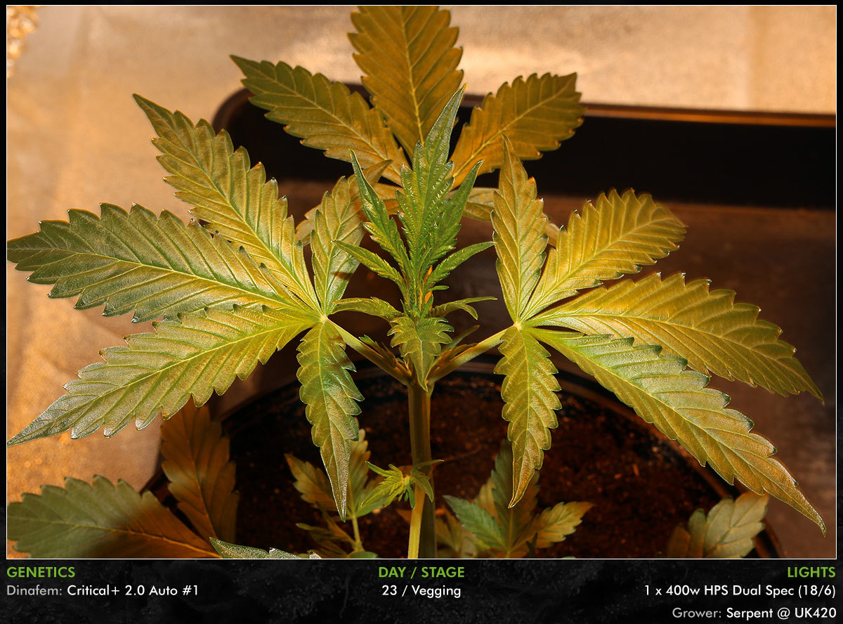 large.Autos-Day23-03.jpg