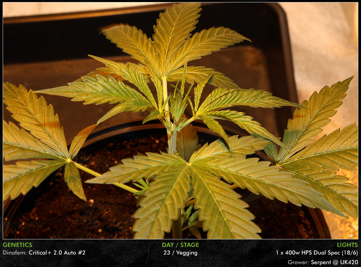 large.Autos-Day23-04.jpg