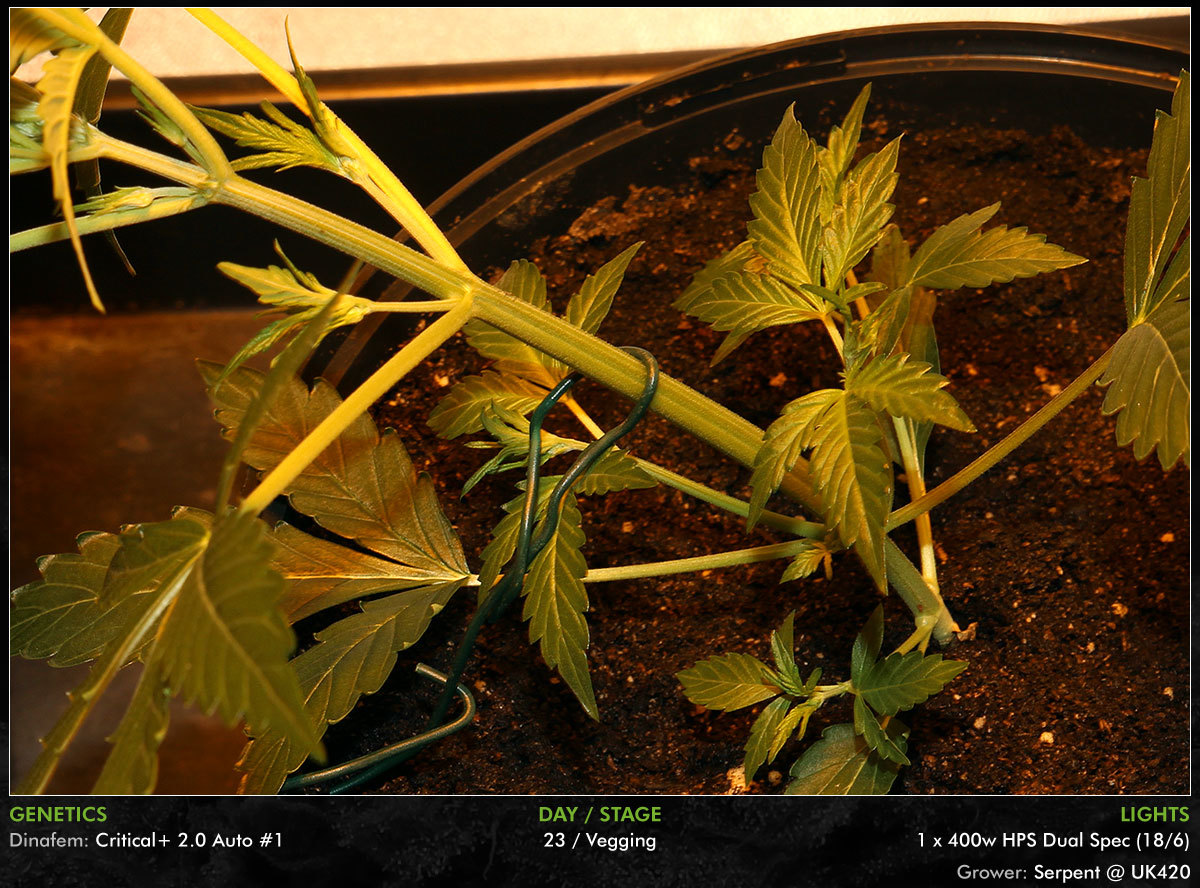 large.Autos-Day23-05.jpg