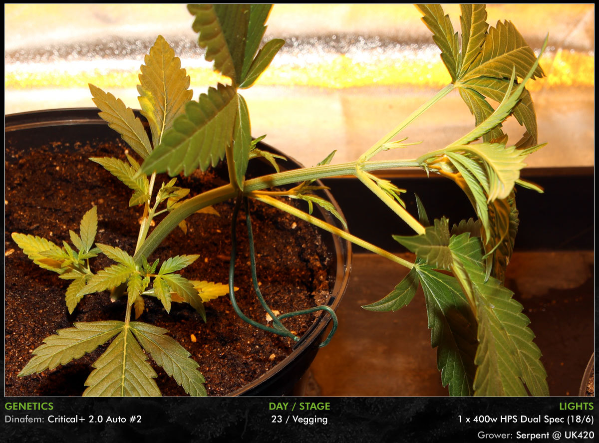 large.Autos-Day23-06.jpg