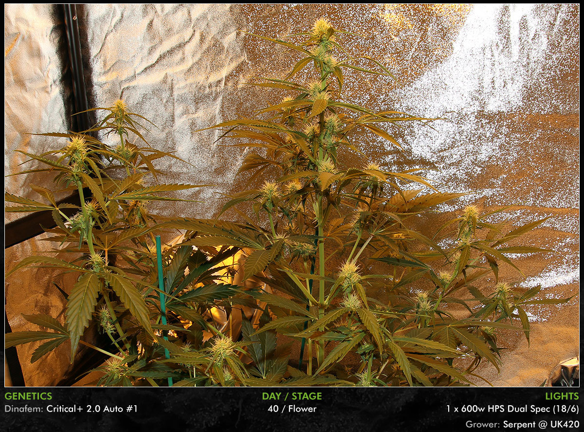 large.Autos-Day40-07.jpg