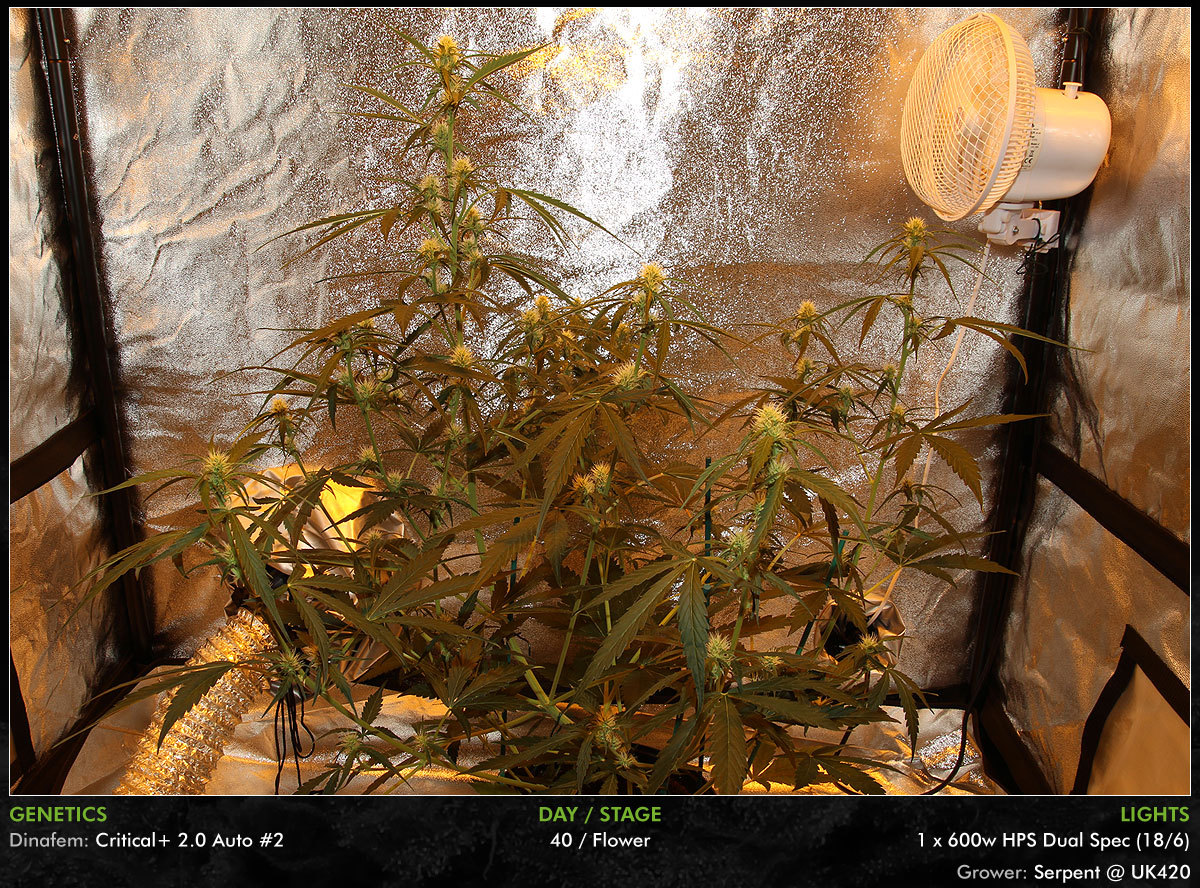 large.Autos-Day40-12.jpg