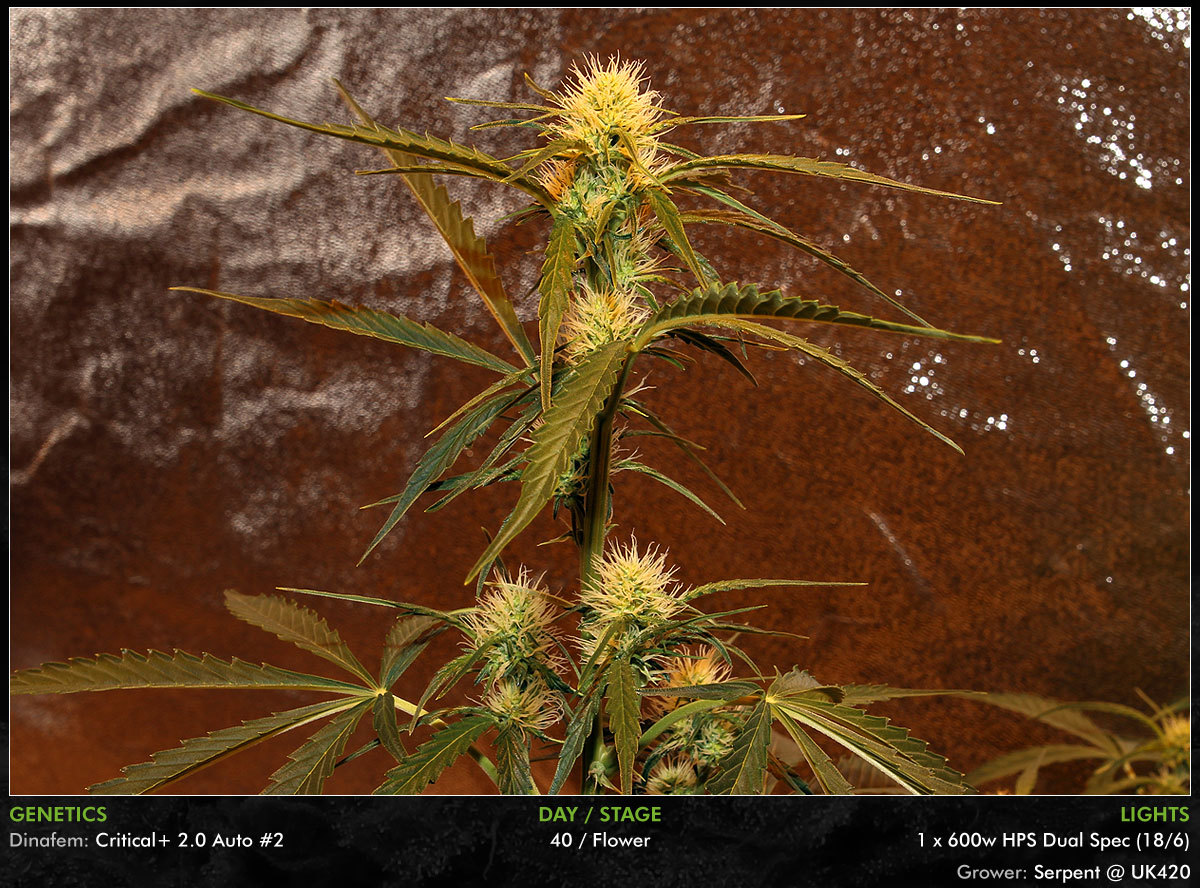 large.Autos-Day40-14.jpg
