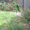 A few colour a In The garden