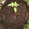 Purkle pot up 12 liter grow bag