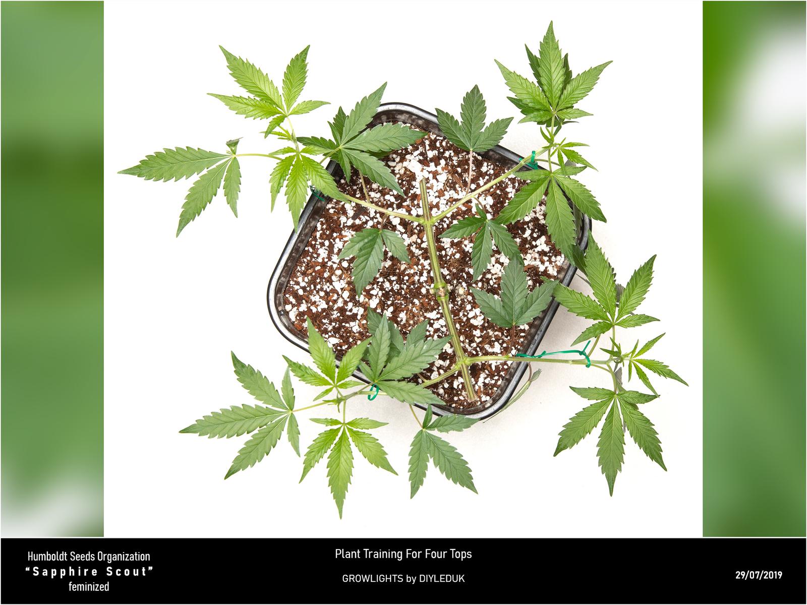 large.5d3f306e282d1_HSO-SapphireScout-Planttrainingforfourtops-29-07-2019-web.jpg