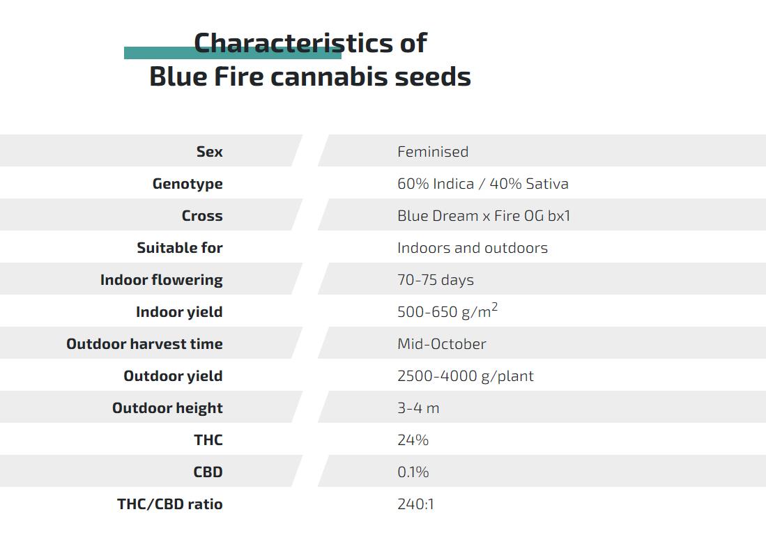 large.HSO-BlueFire-Description.jpg