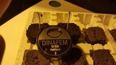 Dinafem purps#1