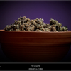 Dinafem - Purps - The Harvest Pot
