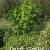 Date Grape