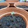 Seedlingwater1.jpg