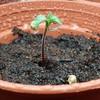 Seedlingwater2.jpg