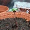 Seedlingwater3.jpg
