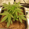 Day 20 Auto Cookie
