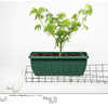 Dinafem - Quick Gorilla - Day -- Above Ground - Plant And Plant Support Parts 06/01/2020