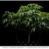 Dinafem - Ocean Grown Cookies - Final Spidermite Treatment - 24/01/2020