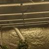 New veg light