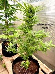 2020 lockdown garden grow