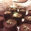 M.A.C straight into final pots