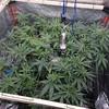 Green gelato 6 weeks5f0059fe8af8c-DSC-0802-copy-1376x7741.jpg
