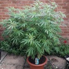 Backyard photoperiod grow
