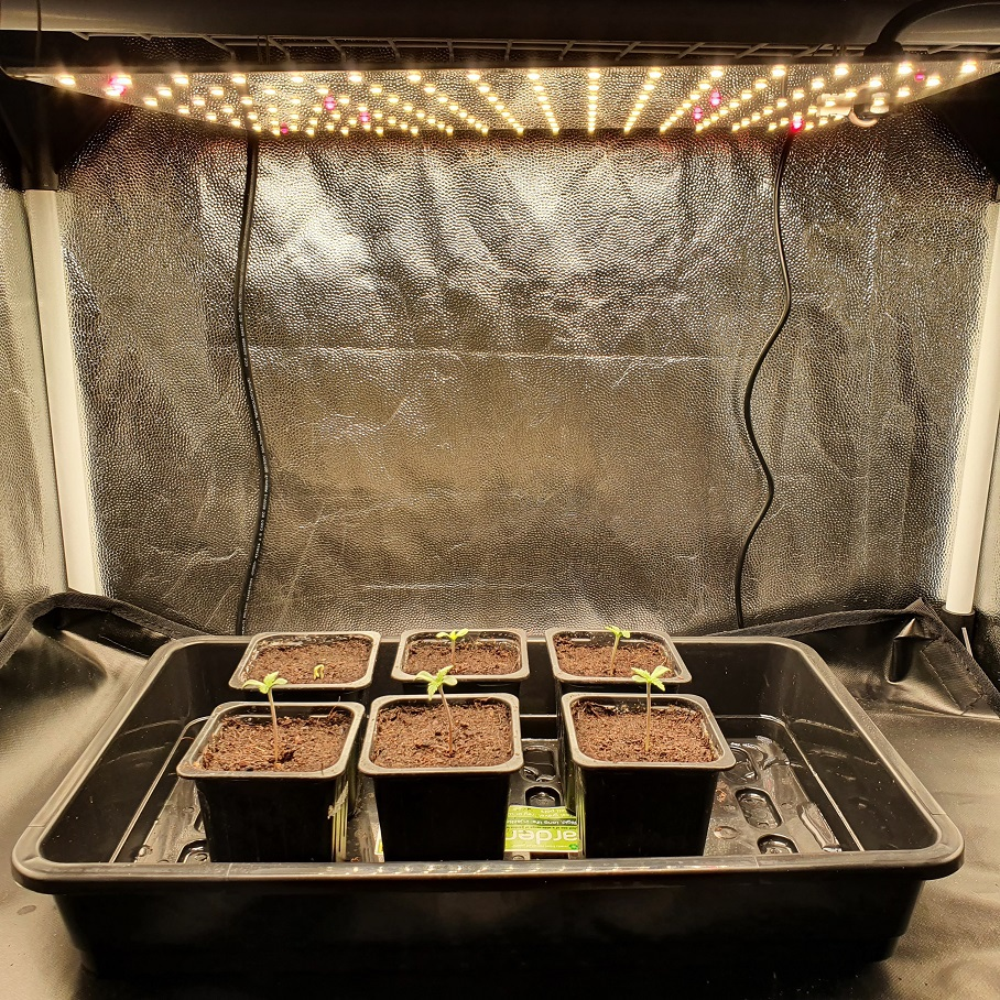 large.10112020GerminationA.jpg