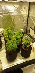 LED grow