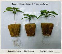 grow forth & multi-strain