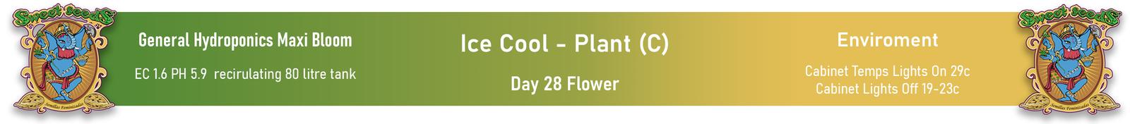 large.601ec5a518609_SweetSeeds-IceCool-PlantC-Day28FlowerInfoPanel-05-02-2021.jpg