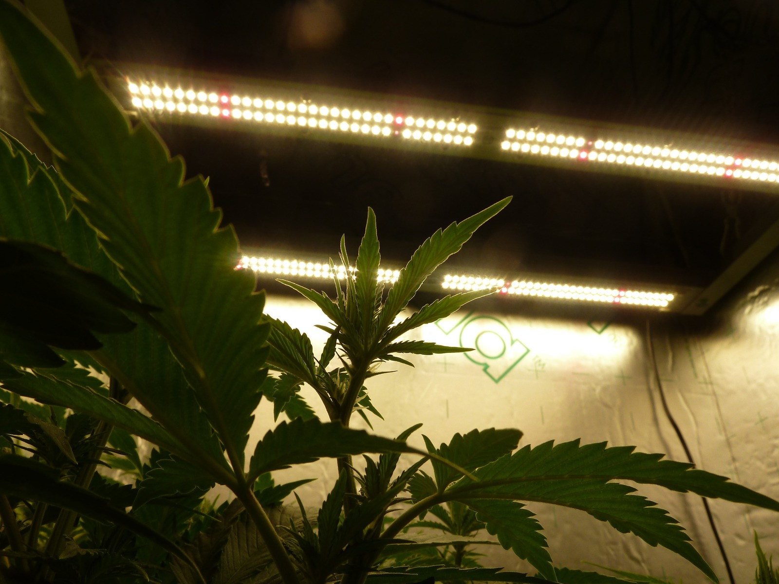 large.lights.jpg