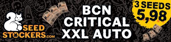 large.online-banner-BCN-Critical-600x150