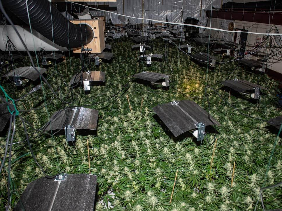 cannabis-bingo-hall.jpg