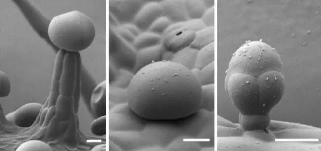 cannabis-microscopy.webp?w=650&f=a5d9561