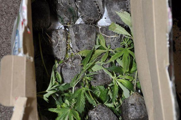 0_Cannabis-Production.jpg