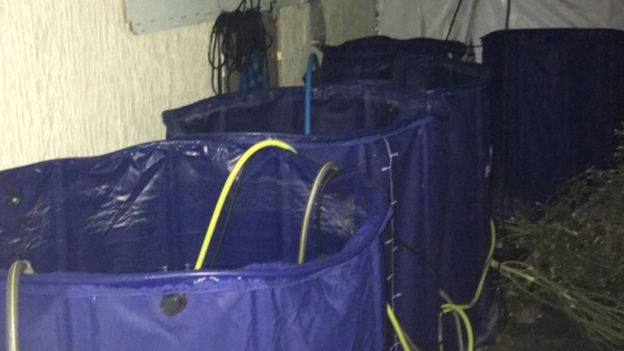 Water containers at the cannabis factory