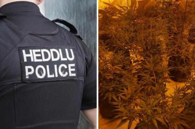 A cannabis farm was discovered by police. Picture: Gwent Police.