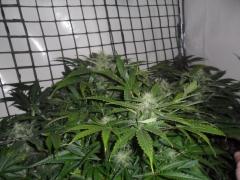 Hazy's Herbs