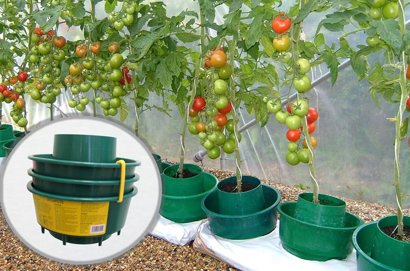 pots facilitant l 39 arrosage les tomates sous serre. Black Bedroom Furniture Sets. Home Design Ideas