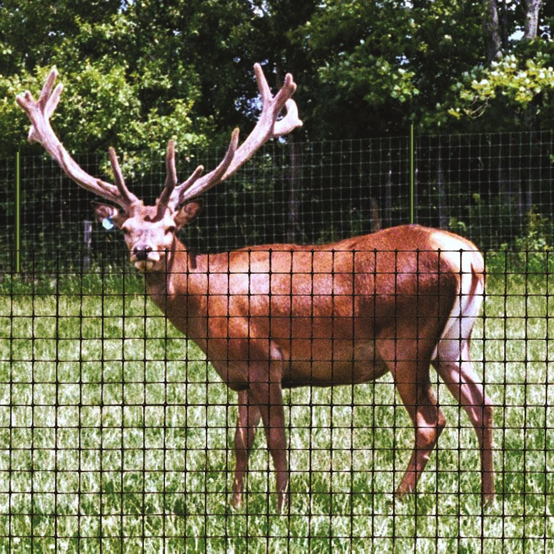 large.n2001_deer_fencing_2.jpg